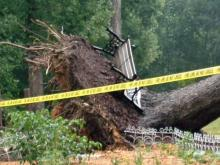 Storms down trees in central N.C.
