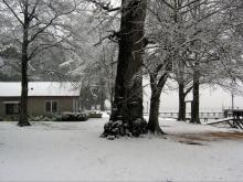 Snowy trees and yard, Pamlico Beach, NC on Feb 10, 2011.