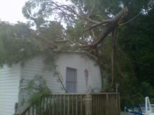 Tree snapped by storm forces Johnston family from home