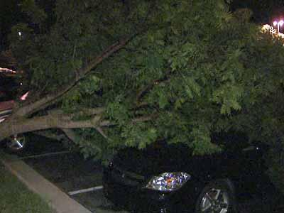 During severe weather, a tree fell on cars in the parking lot at the Embassy Suites on Harrison Oaks Boulevard in Cary on Aug. 14, 2011.