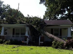 A tree fell on a house on Bethlehem Road in Rocky Mount (Photo by Jason Capps)