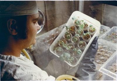 A lab technician examines seedlings flown aboard Apollo 14 (Credit: NASA/JSC)