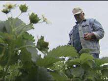 Farmers unfazed by frost threat