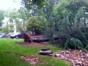 A toppled tree in north Raleigh on May 9, 2012.
