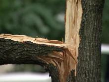 snapped tree