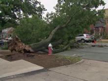 Downed tree, Franklin Street