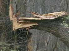 Whipping winds leave damage in Wake Forest