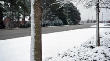 IMAGES: Photos: Snow creates winter wonderland in Wilson