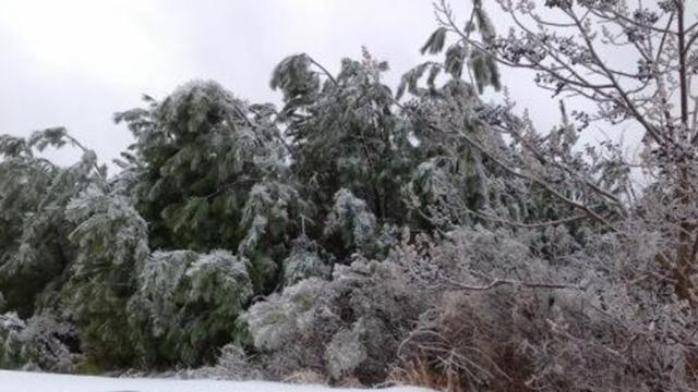 Snow and ice weigh down on trees in north Raleigh on Feb. 13, 2014. (Amanda Lamb/WRAL)