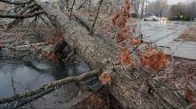 IMAGES: Ice, wind down trees across area; thousands without power