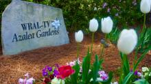 IMAGES: Spring colors pop in WRAL Azalea Gardens
