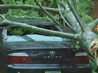 Trees damaged homes and cars in Durham Thursday, May 15, 2014, but no injuries were reported.