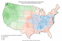 Whether you call them fireflies or lightning bugs depends a lot on where you grew up (Joshua Catz/NCSU)