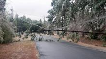 Tree crashes down on Pembroke power line