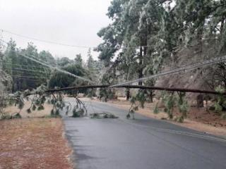 A tree crashes down on a power line in the Pine Lake Park neighborhood in Pembroke on Feb. 17, 2015. (Photo courtesy of Peter Hunt)
