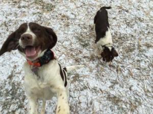 Dogs enjoy the snow