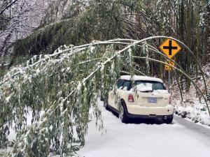 Snow covers Gardner Street in Raleigh