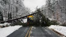 Downed tree blocks John Jones Road in Durham