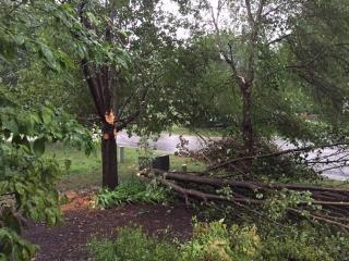 Downed tree in north Durham. (Submitted by Nancy Wood)