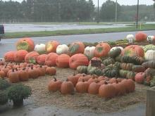 Storms complicating pumpkin sales for local farmers
