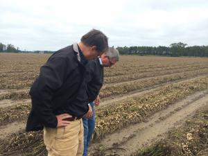Gov. Pat McCrory looks over a flood-damaged peanut crop in Bladen County.
