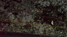 Tree limb down at 5308 Penny Road