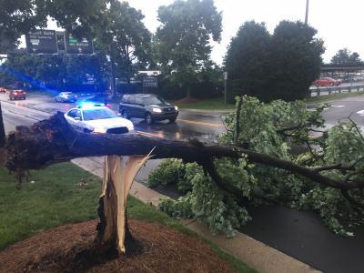 Downed tree at RDU