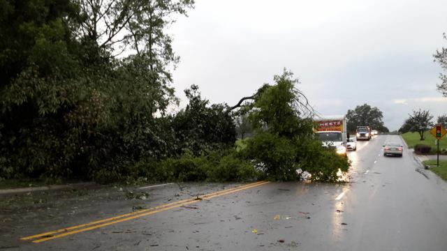 Tree down near Woodlan Park cemetery