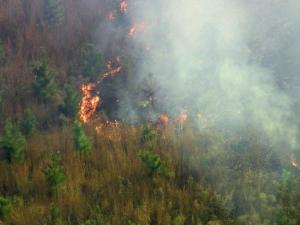 A wildfire burned across about eight acres outside Holly Springs Monday afternoon.