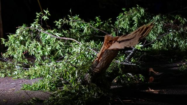 Storm knocks down tree in Raleigh