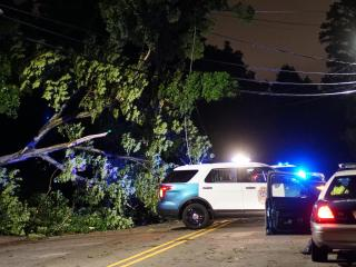 Overnight storms knocked down a large tree in Raleigh at Jarvis and Craig streets.