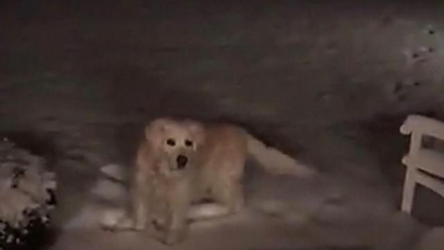 Pinehurst dog during Wednesday's winter weather