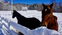 IMAGES: Durham County horses enjoy snow day
