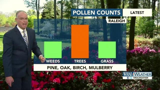 pollen dmi