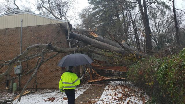 Tree on apartment building