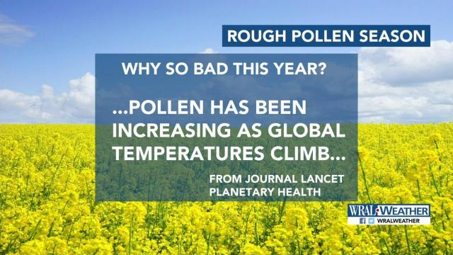 Maze: Higher pollen counts to plague allergy sufferers for