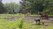 IMAGES: Pictures of tornado damage in Warren County