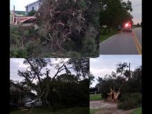 Trees down, other damage in Princeton