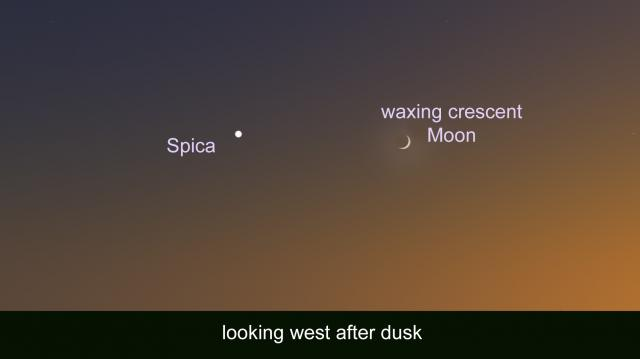 the bright star Spica will be visible to the left of the waxing crescent Moon on Friday