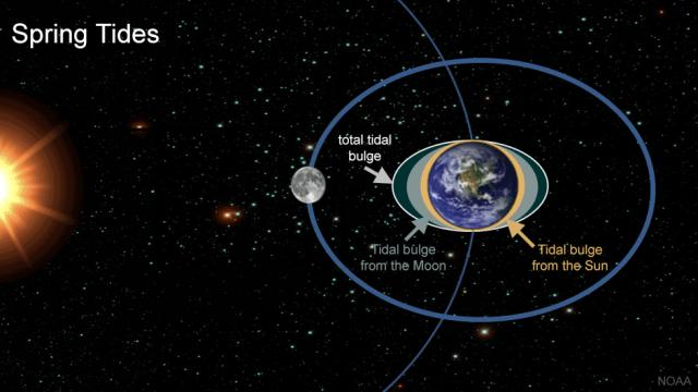 Spring tides occur at new and full moons with the Moon's gravity combines with the Suns (image: NOAA)