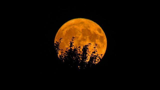Harvest Moon lights evenings all week
