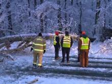 Tree falls in Roxboro, blocks entire road