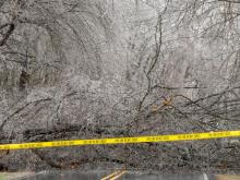 Large trees have fallen in parts of northern NC counties, weighted down by ice.