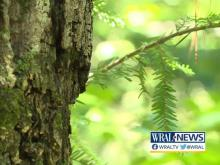 We're feeling fall. Here's what to expect as the leaves change in NC