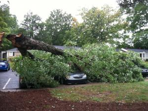 Huge branch down on Bernard Street in Raleigh. It landed on top of four cars. (Photo courtesy of William Earnhardt)