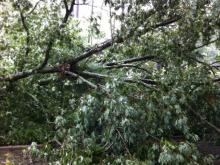Wilson downed tree