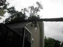 Hurricane Irene takes down trees across North Carolina.