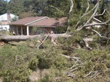 Tree slams into Goldsboro couple's home