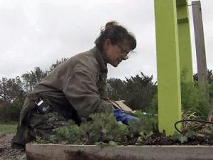 For Hatteras Island resident Kimmie Robertson, returning to normal means replacing the roadside garbage with roadside gardens.