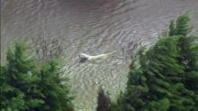 IMAGES: Sky 5: Dog swims to safety in Edgecombe County